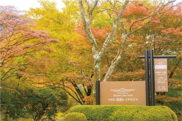 箱根レイクホテルに隣接する湖尻園地には芝生広場などがあり、美しい紅葉が楽しめる