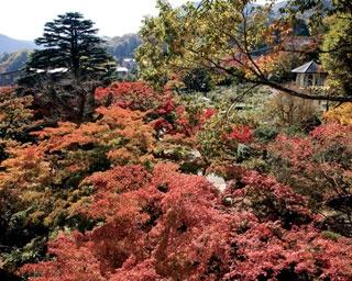 秋の箱根で紅葉狩り!箱根強羅公園ほか、注目スポットをピックアップ