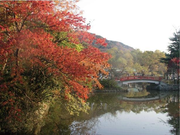 秋色に染まる鶴岡八幡宮の境内。旗上弁財天社へとかかる赤い橋と、紅葉のコラボは心を奪われる