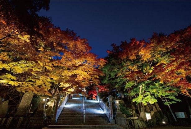 【写真を見る】紅葉の時期は夜になると、大山寺と阿夫利神社の下社でライトアップを実施(写真は大山阿夫利神社下社)