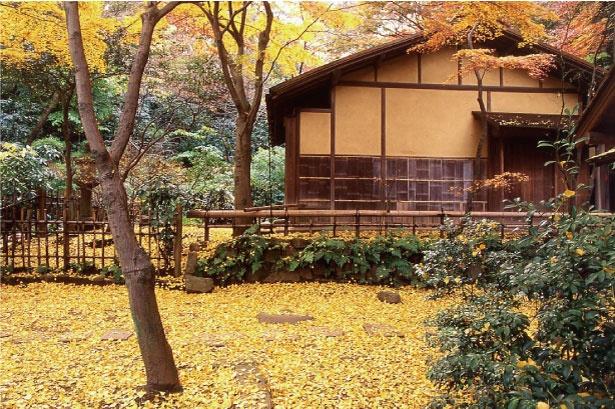 三溪園にある春草廬は、信長の弟・織田有楽斎作と伝えられる茶室。イチョウの落葉は絶景だ