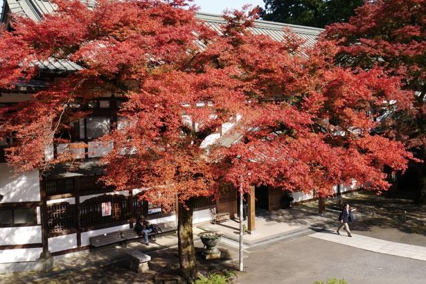 大雄山最乗寺は開山堂、鐘楼、石畳の参道のほか、天狗の小径の紅葉も見応えがある