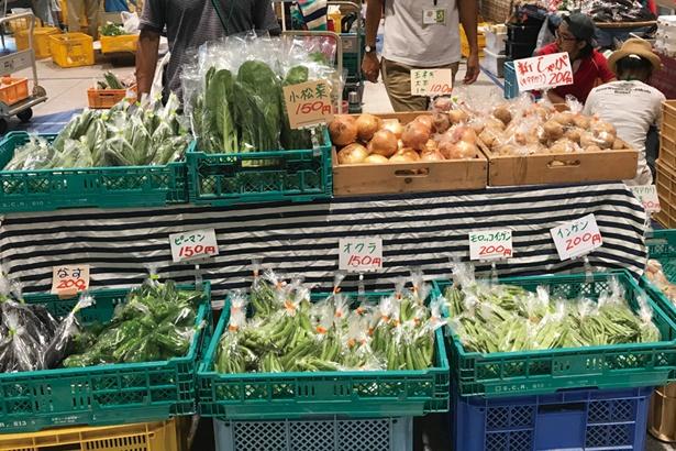 愛知県美浜町の太田農園。採れたての野菜が所狭しと並ぶ