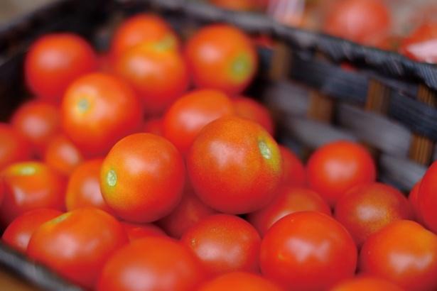 新鮮なオーガニック野菜を、生産者から直接購入できる