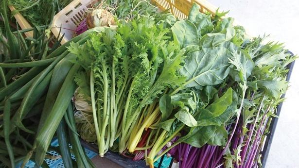 「ねのひら物語」の「サラダセット」(350円~)は、わさび菜やホウレンソウなど野菜がいっぱいでお得!