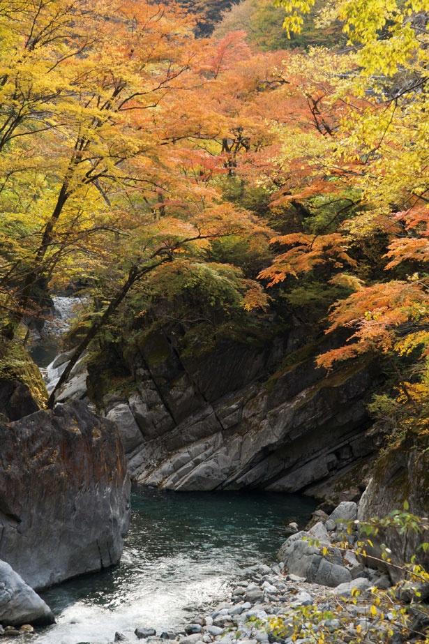 奥秩父随一と称される、中津峡の紅葉。峡谷を木々が色鮮やかに染め上げる