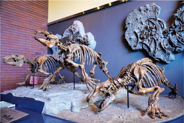 埼玉県立自然の博物館に展示されている、太古の埼玉にいた謎の海獣「パレオパラドキ シア」の復元模型