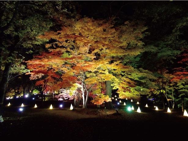 500本のカエデが幻想的な空間を演出する、国営武蔵丘陵森林公園の「紅葉見ナイト」。期間中、カエデ園では草月流空間インスタレーシ ョンの展示も