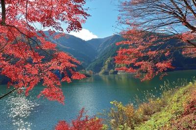 名栗湖では、カヌー体験や釣りなどのアクティビティを楽しむことができる