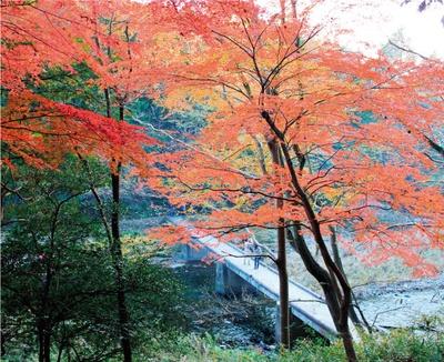 嵐山渓谷の見どころは冠水橋から上流への散策路と、展望台から与謝野晶子歌碑への遊歩道