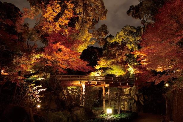【写真を見る】趣ある庭園が赤に染まる夜紅葉が見事な「徳川園」(名古屋市東区)