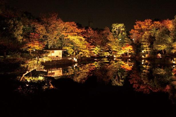 錦秋に染まる庭園を散策!「白鳥庭園」(名古屋市熱田区)