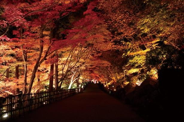 多様な紅葉景色が堪能できる「東山動植物園」(名古屋市千種区)