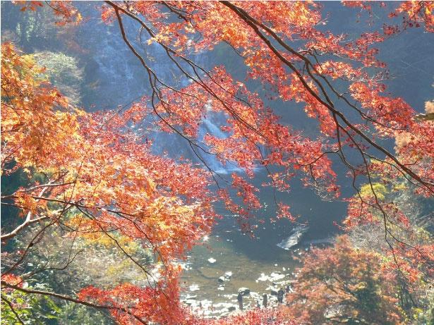 【写真を見る】11月23日(金・祝)には「養老渓谷もみじまつり」が開催され、紅葉とともに和太鼓の演奏イベントなどが楽しめる