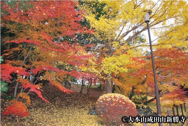 成田山公園は最寄り駅の成田駅・京成成田駅から徒歩10分という、紅葉スポットとしては屈指のアクセスのよさも魅力