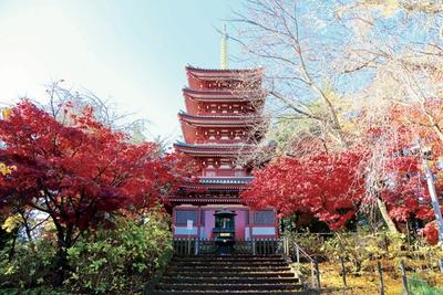 日蓮宗 本山本土寺の紅葉は11月下旬が見ごろ。歴史ある建築物とモミジの見事な調和ある景観が楽しめる