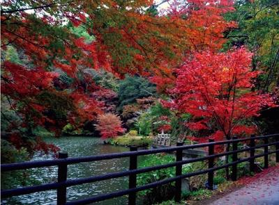 檀特山 小松寺の池には鯉が泳いでいて、 紅葉との共演は風流だ