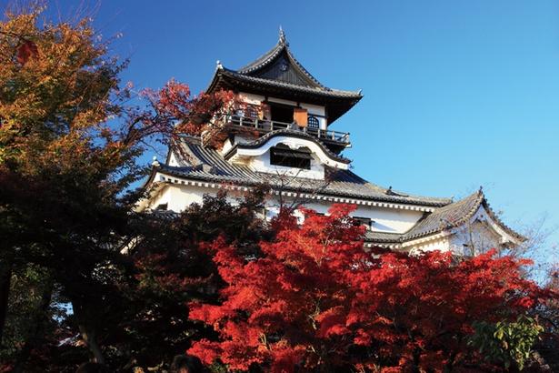 国宝犬山城とモミジの見事なコントラストは必見