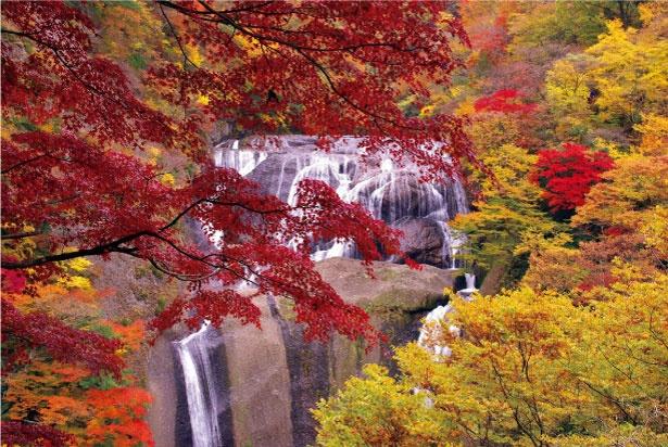 【写真を見る】高さ120メートル、幅73メートルの大きさを誇る袋田の滝。紅葉の美しさは群を抜いていて、西行法師が訪れた際に称賛する歌を詠むほど