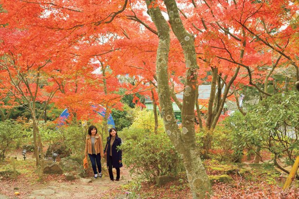 筑波山中腹のケーブルカー宮脇駅周辺は、おすすめの紅葉スポットのひとつ