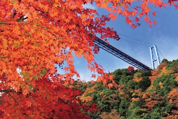 竜神大吊橋の全長は375メートル。一度に3500人が渡っても大丈夫なように、工夫が凝らされている
