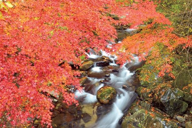 花園川沿いをゆったりと散策しながら、紅葉を楽しむのがおすすめ