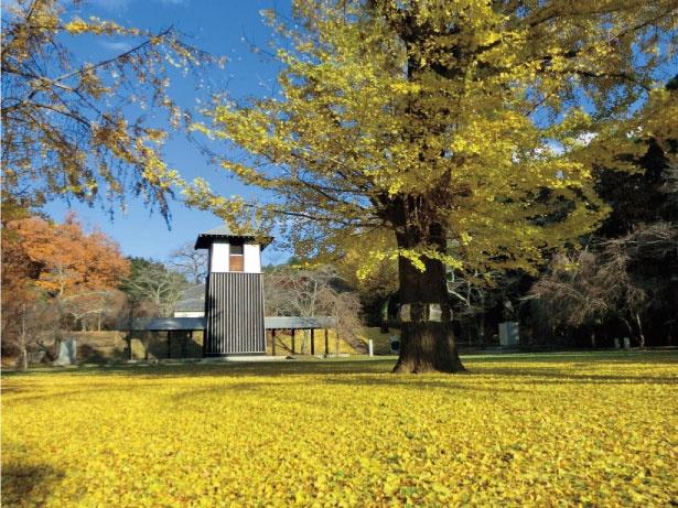 佐白山麓公の園内には4キロメートルのハイキングコースが あり、紅葉を眺めながら散歩を楽しめる