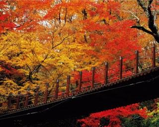 袋田の滝に筑波山!茨城県のおすすめ紅葉スポット8選