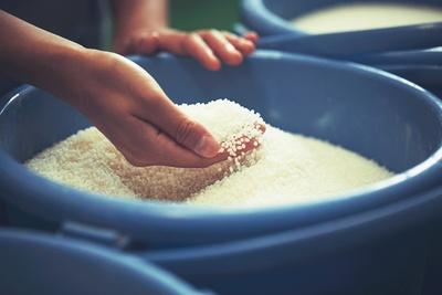 日本酒で使われる米は、酒造り専用米が用いられる