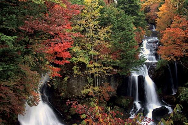 竜になぞらえられた名瀑と、美麗な紅葉のコントラストを楽しめる竜頭ノ滝