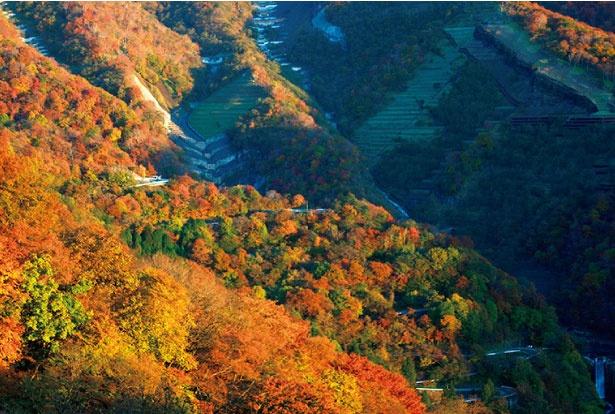 いろは坂は上りと下りを合計すると、48カ所もの急カーブがあるのが特徴