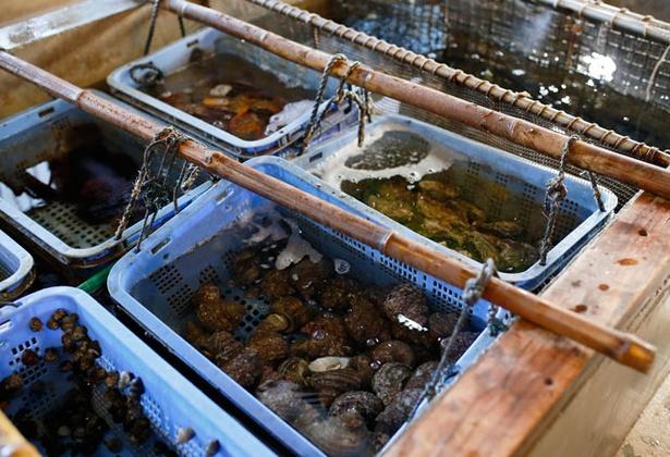 塩湯 / 生けすに伊勢エビやハマチなど旬の魚が泳ぐ