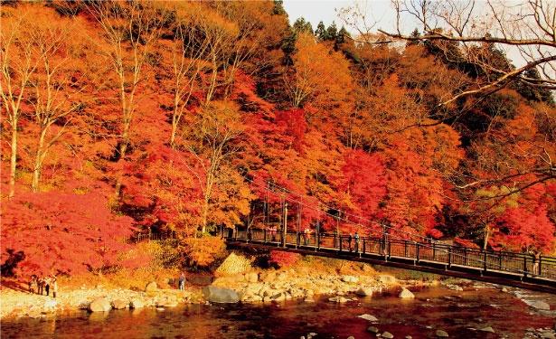 【写真を見る】紅葉の絶景エリア・塩原。ドライブしながらスポットを巡るのもおすすめ