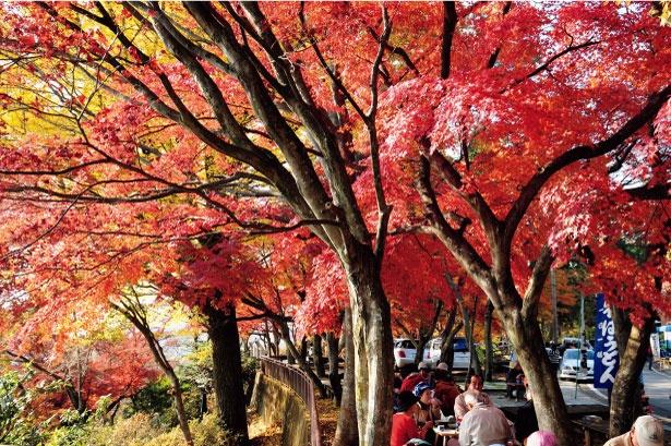 「陸の松島」と称される太平山県立自然公園