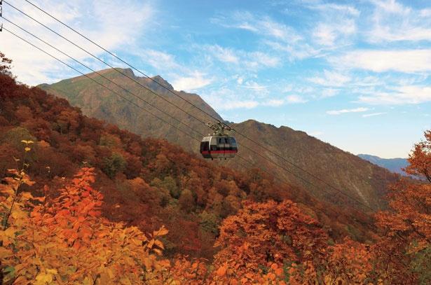 【写真を見る】ロープウェイに乗って、眼下に広がる谷川岳の紅葉を眺めるのもおすすめ
