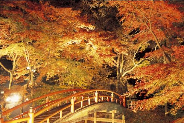伊香保温泉の湯本付近にある河鹿橋では、夕方からライトアップが行われ、昼間とは異なる幻想的な光景が楽しめる