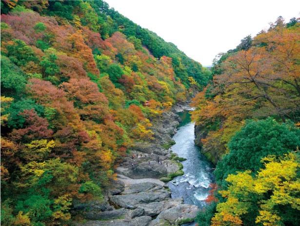 高津戸峡は遊歩道が整備されており、ゴリラ岩やポットホールなど紅葉以外の見どころも満載