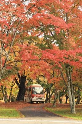 【写真を見る】敷地内を周遊しているバスは軽井沢プリンスホテル利用者なら無料