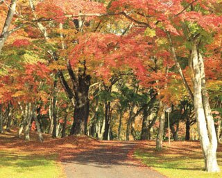 この秋行きたい!軽井沢&東北の紅葉スポット3選