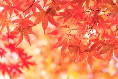 美しい紅葉になる気候条件とは(写真はイメージ)