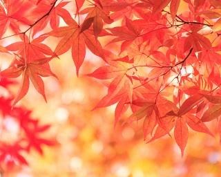 """「猛暑の年は紅葉がきれい」って本当?気象予報士に聞いた""""美しい紅葉になる条件"""""""