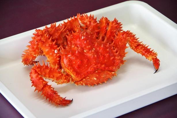 茹でると鮮やかな真っ赤に! 朝茹で花咲ガニは大きさによりますが、1杯2000~3000円くらいです