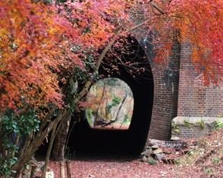 秋には約200本のカエデ類が色づく「定光寺」