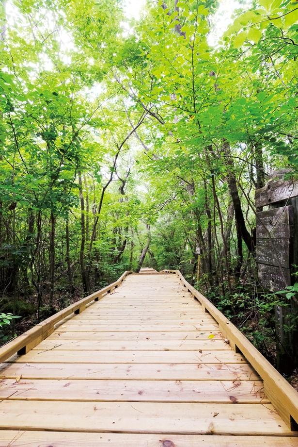 タデ原湿原 / 再整備された遊歩道。ハイキングコースは60分ほどで1周できる
