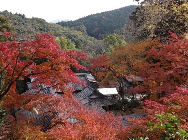 永勝寺 / お寺にあざやかな紅葉が映える