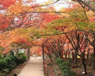厳選!秋の極彩色に染まる福岡の紅葉名所4選