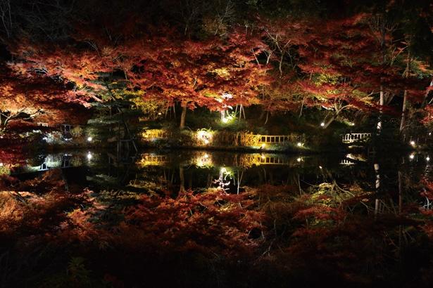 【写真を見る】動植物園ならではの多彩な紅葉と全国屈指の逆さもみじに感動