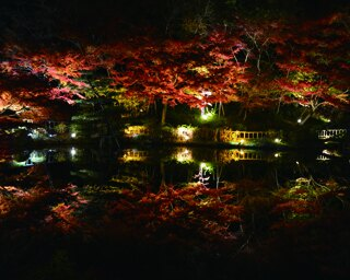 「也有園(やゆうえん)」から奥地までの園路沿いに広がる美しい昼紅葉も要チェック