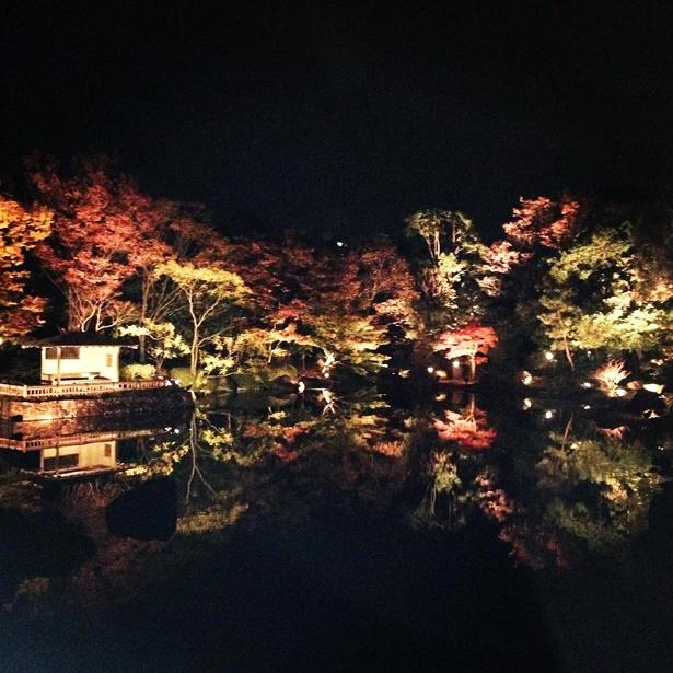 中部地区最大級の日本庭園「白鳥庭園」の紅葉ライトアップ