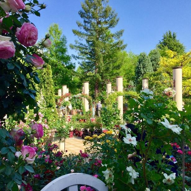 「久屋大通庭園フラリエ」では、インスタグラマー必見のガーデンがいっぱい